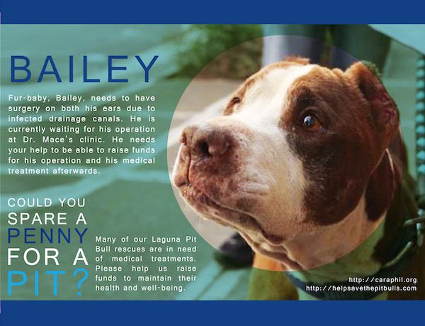 LPB Bailey Needs Your Help