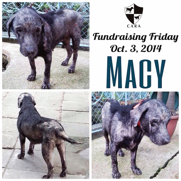 Fundraising Friday: MACY