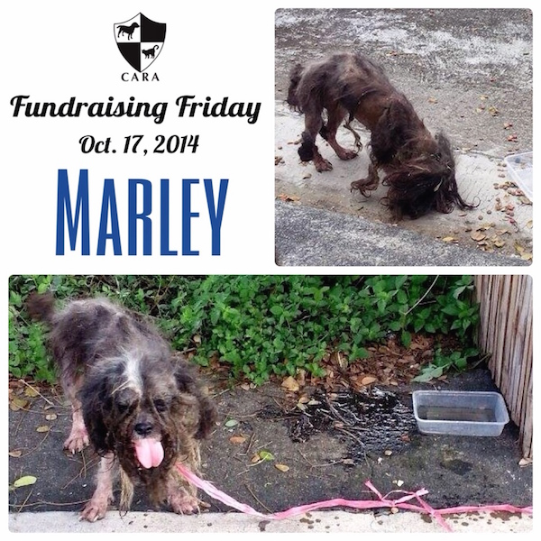 Fundraising Friday: MARLEY