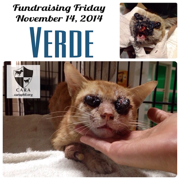 Fundraising Friday: VERDE