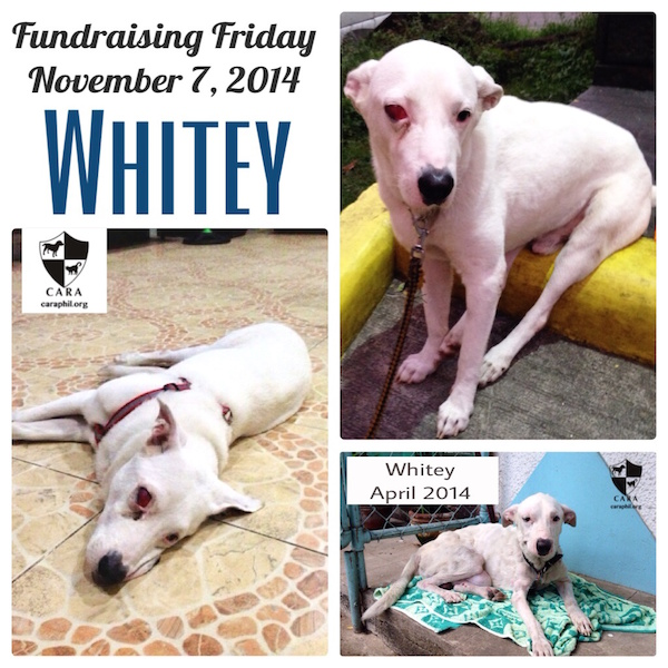 Fundraising Friday: WHITEY
