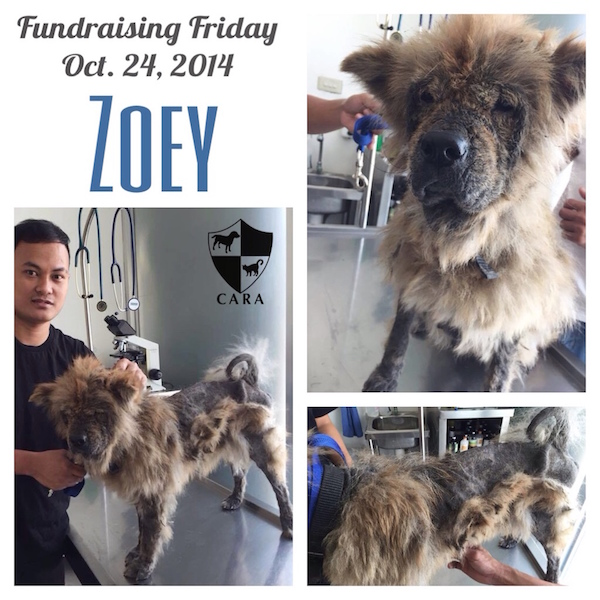 Fundraising Friday: ZOEY
