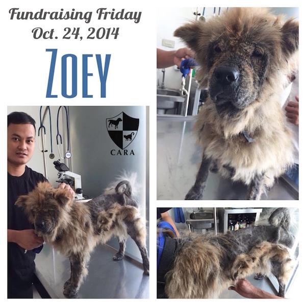 Fundraising Friday: ZOEY