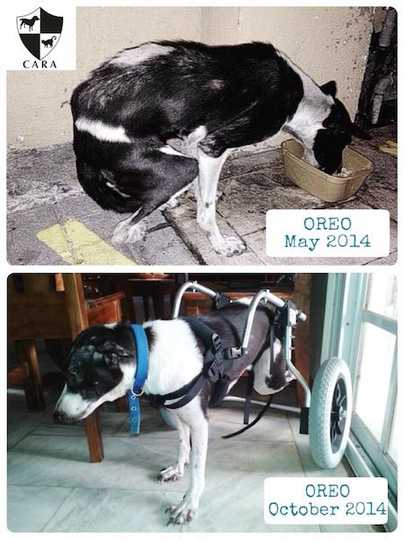 Oreo has new wheels
