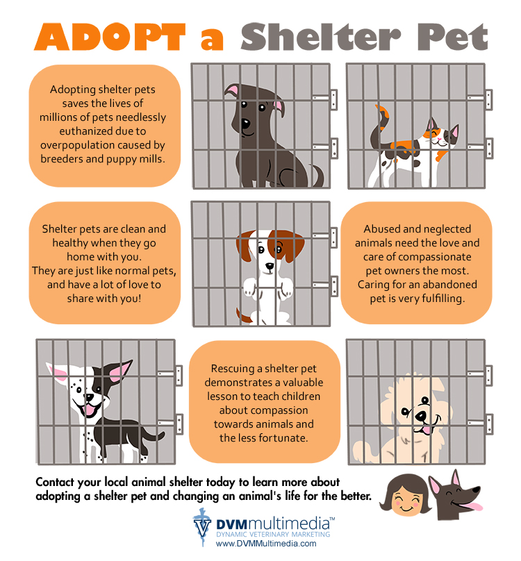 Why adopt a pet?