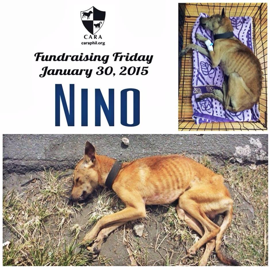 #FundraisingFriday: Please help Nino, found barely breathing
