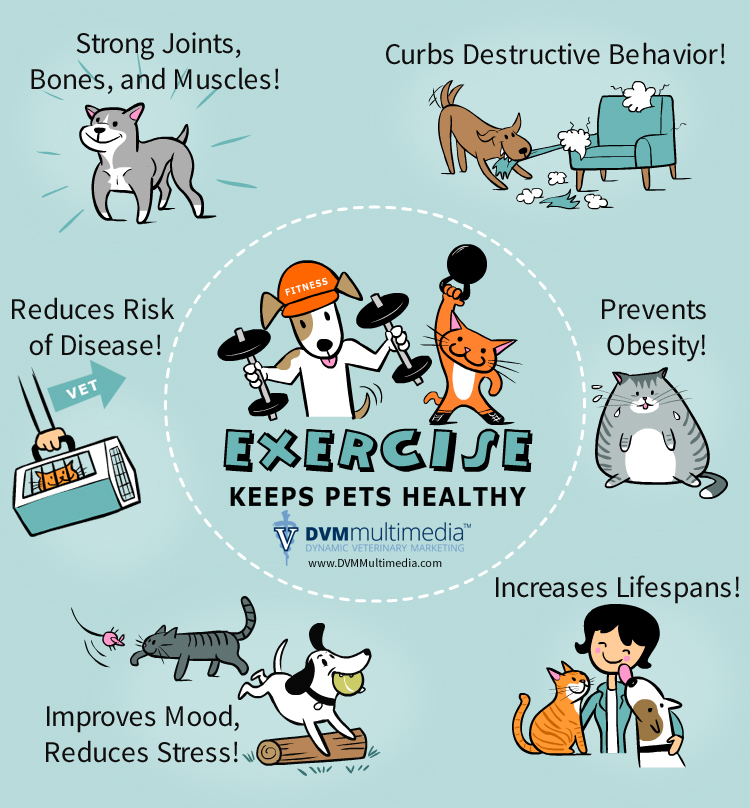 Exercise keeps pets healthy