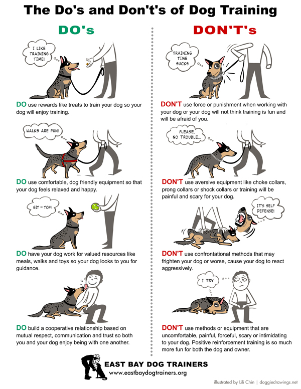 The Dos and Don'ts of Dog Training