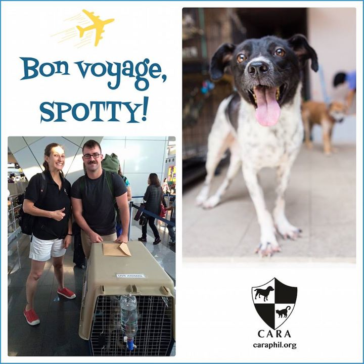 Spotty can walk! (update)