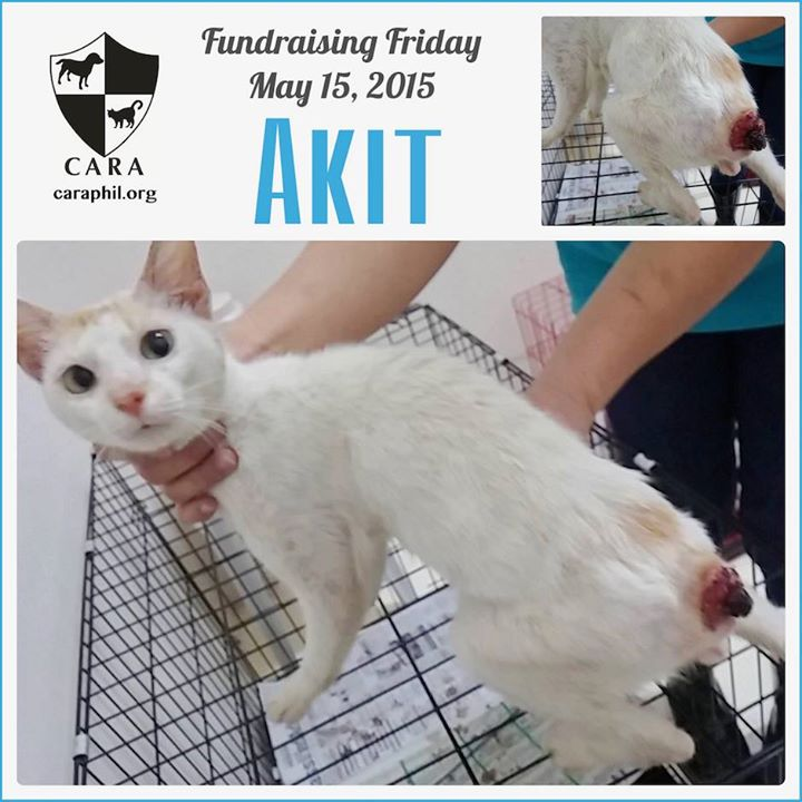 #FundraisingFriday: Please help Akit. His tail was chopped off!