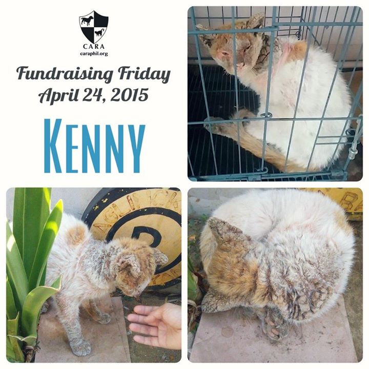 #FundraisingFriday: Please help Kenny, found in terrible condition