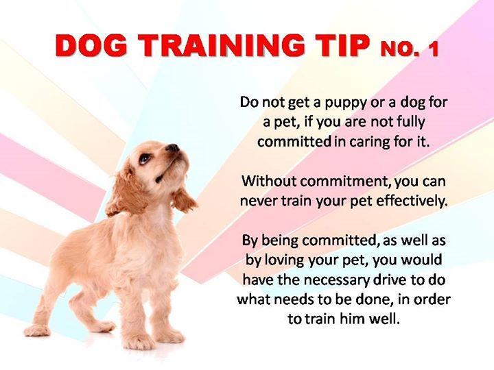 Dog Training Tip: Commit to care for your dog