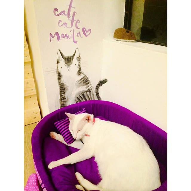 Meet Mama Cat at Cat Cafe Manila