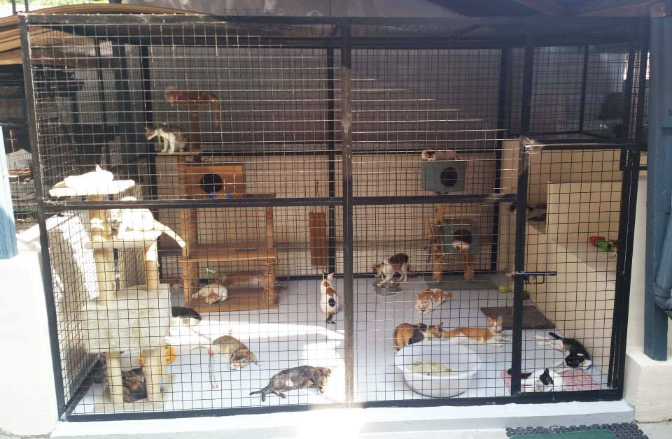 Cattery, Catio and Dog Cages at CARA Clinic