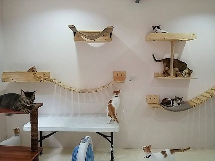 Thanks to KITTYTEKTURA Cat Wall Furniture!