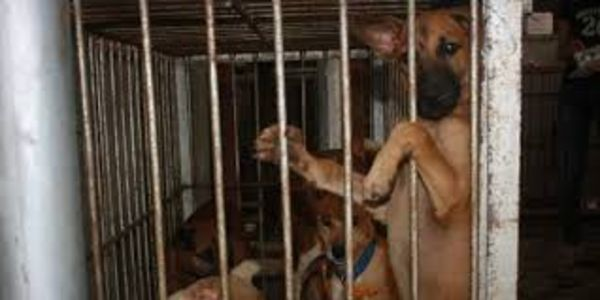 PETITION: Mayors of Metro Manila, Philippines: Stop the Abuse and Neglect of Dogs and Cats at the City Pounds