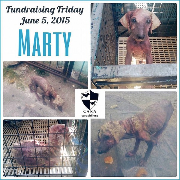 #FundraisingFriday for little Marty