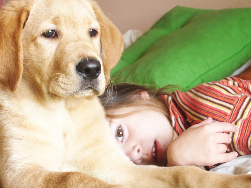 Can Opposites Attract?: A Closer Look At Pet-Human Compatibility