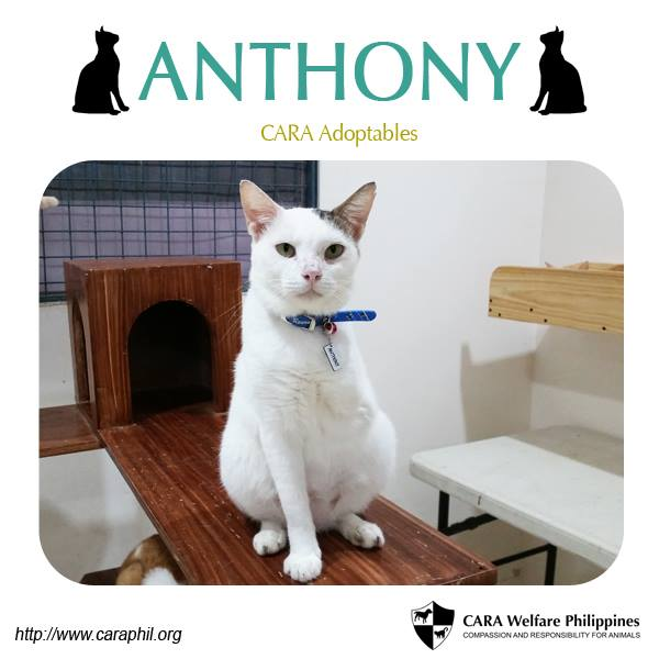 Meet Anthony, the three-legged sweetheart!