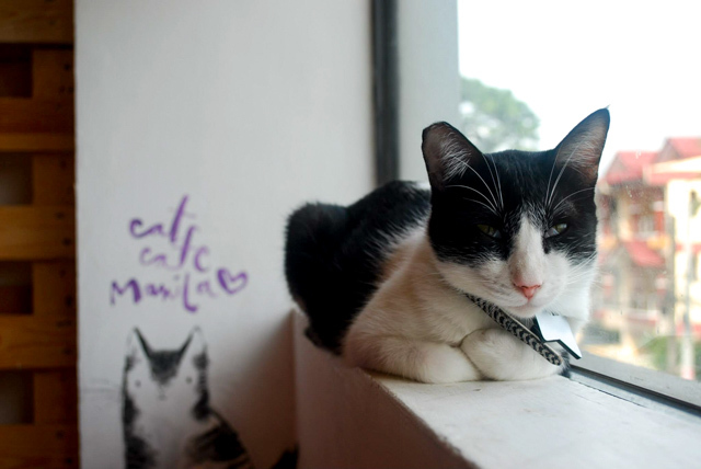 Rappler: Have coffee, pet a cat