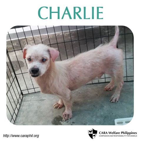Charlie now has a loving home