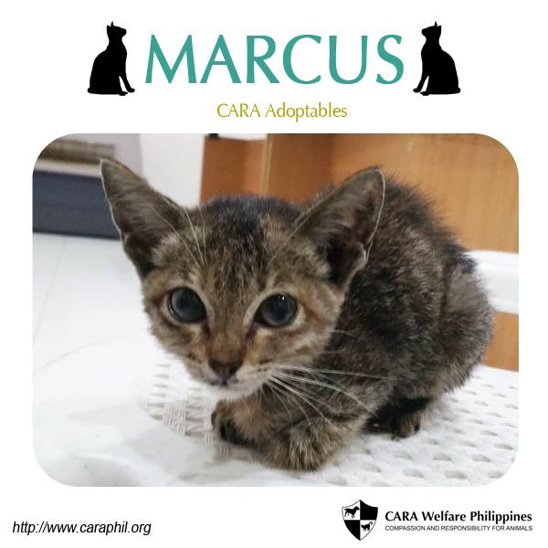 Meet little Marcus at the CARA Clinic!