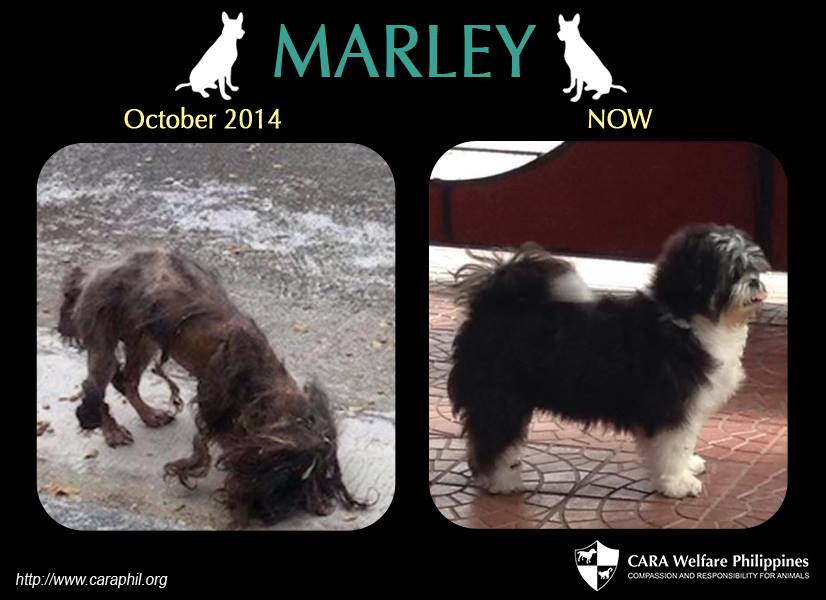 From starving stray to fluffy Marley