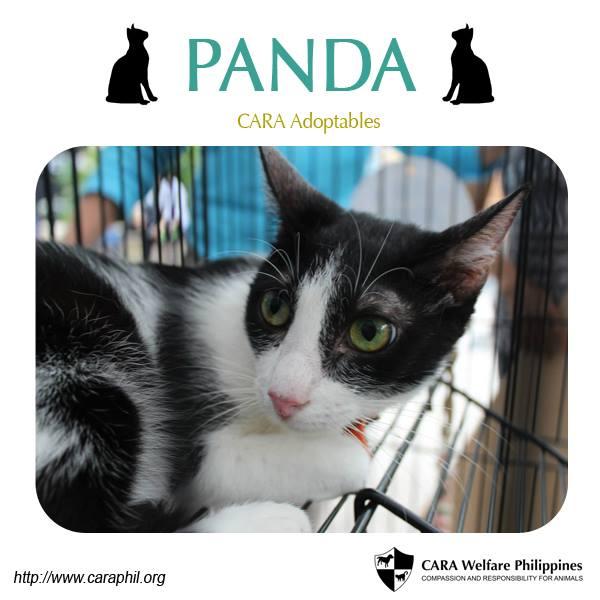 Adopt your own Panda!