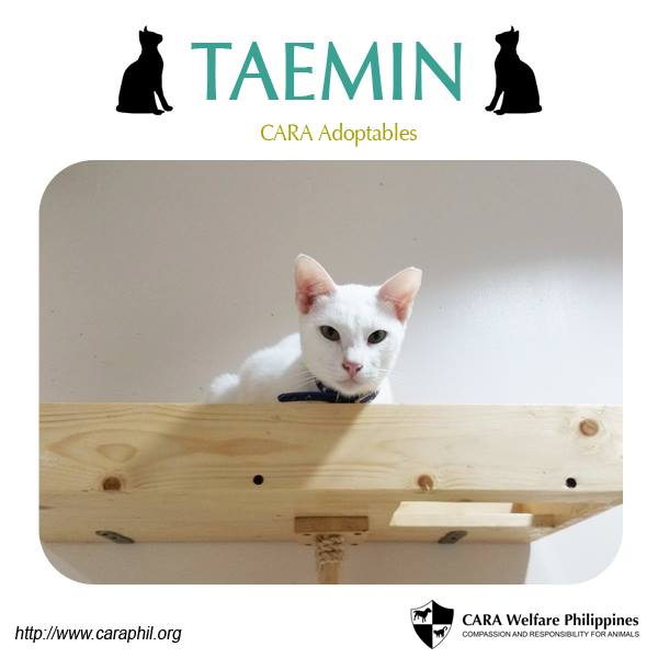 Meet lovable white cat Taemin