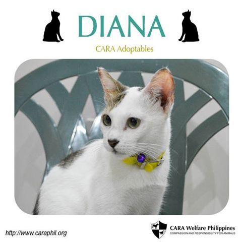 #CARAadoptables: Diana