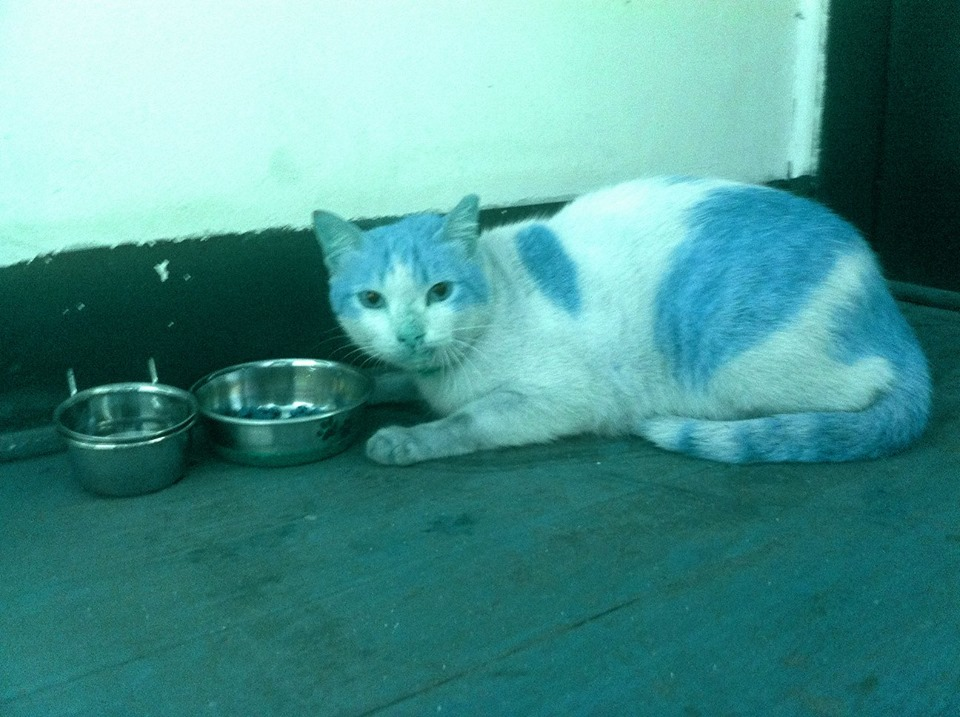 Scared cat found near Greenfield Park in Ortigas