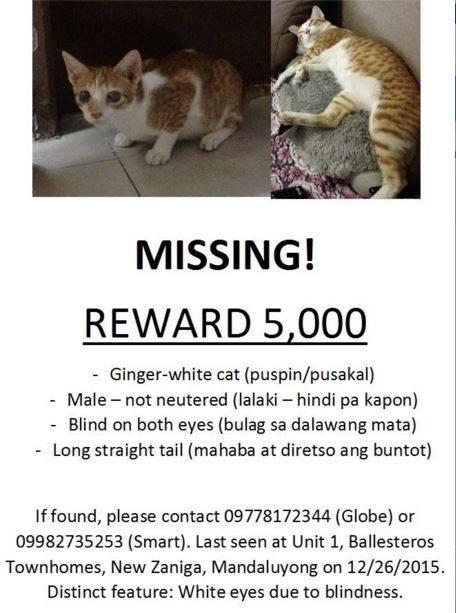 Help find Ginger!