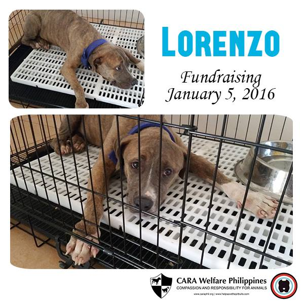 Fundraising Friday: Lorenzo