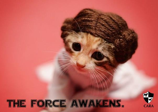 Fundraising Friday: May The PAWrce Be With You