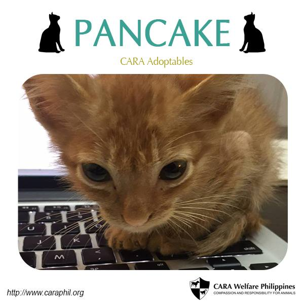 CARA Adoptables: Have Some Pancake