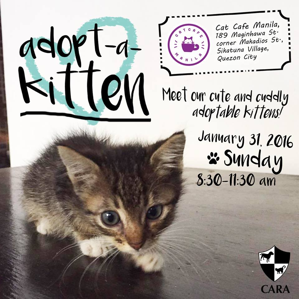 Adopt-A-Kitten Is Back! (January 31, 2016 at Cat Cafe Manila)
