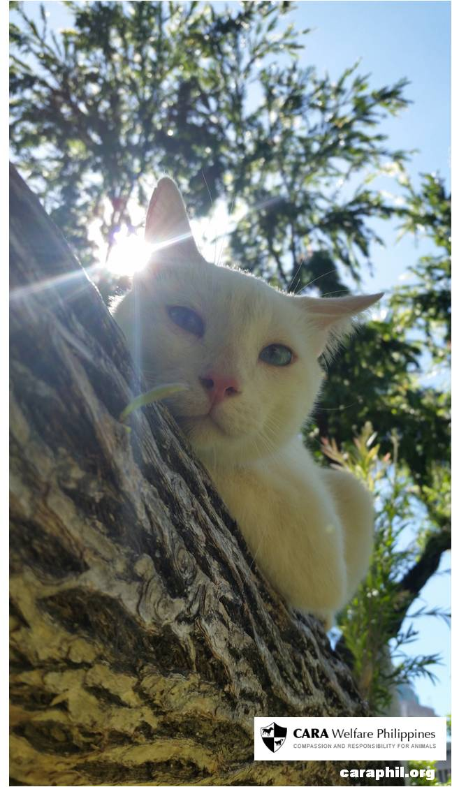 Olaf, the former neighbor's kitty finds his forever home