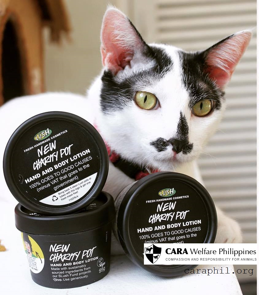 Lush Philippines Charity Pot is extended