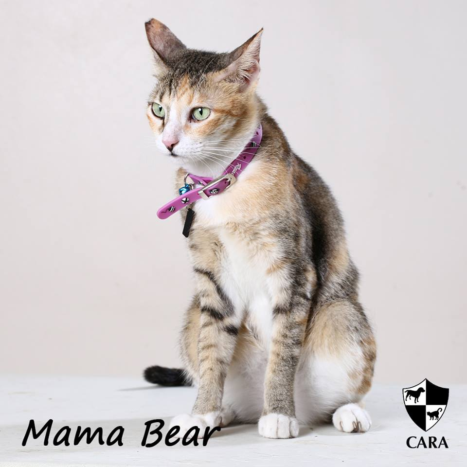I'm Mama Bear, Please Adopt Me