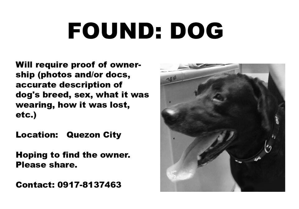 Found: Dog in Quezon City