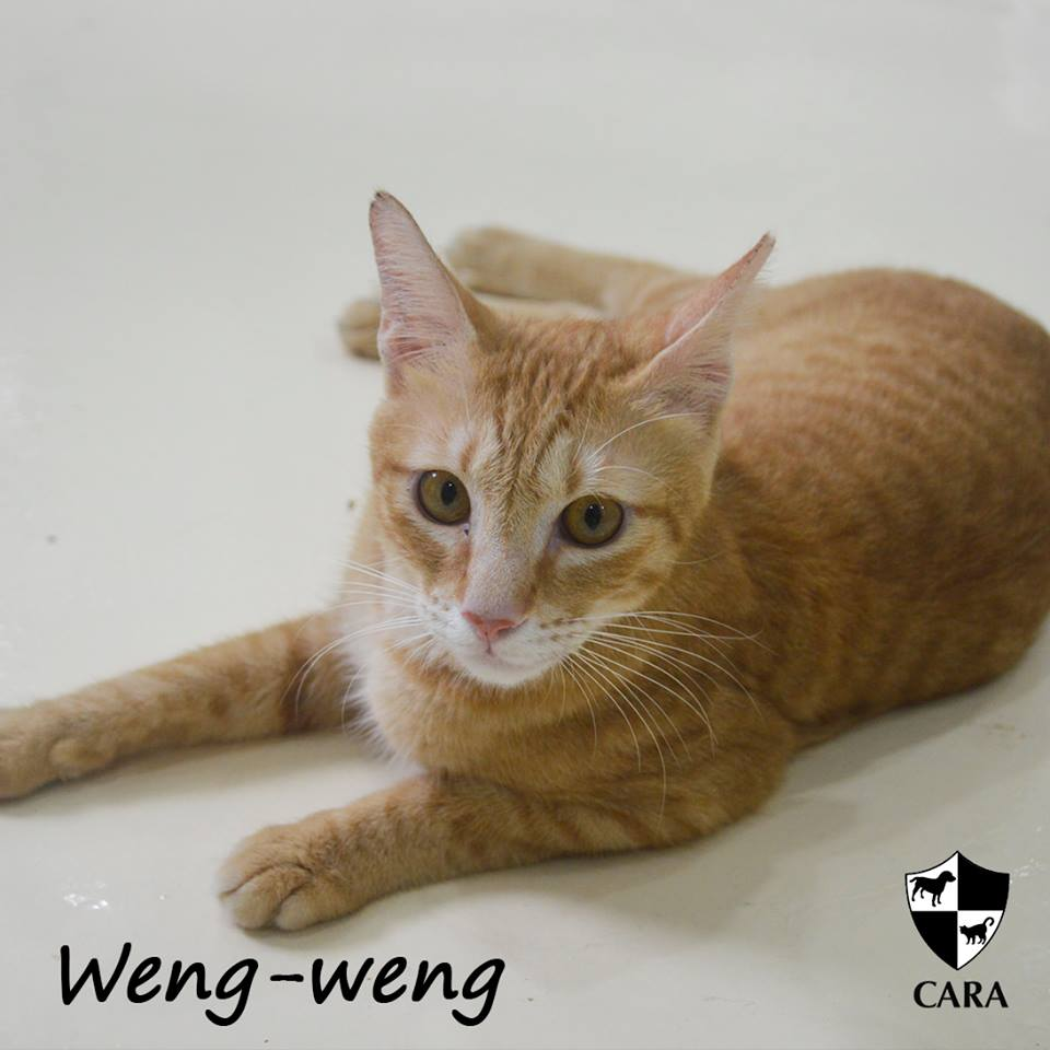 Weng-Weng is the Featured Cat of the Week