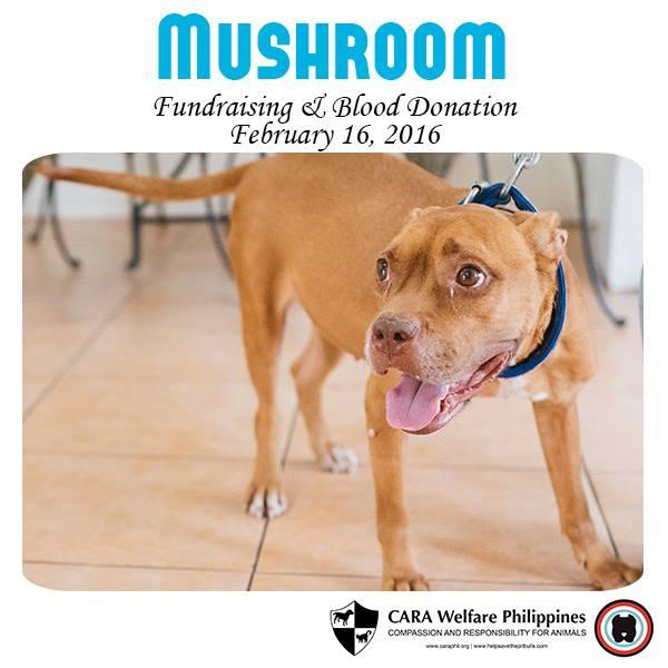 Fundraising for Mushroom