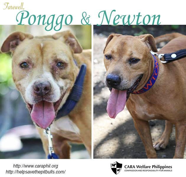Farewell, Ponggo and Newton