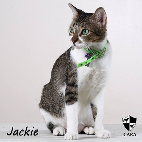 Meet the lovely Jackie
