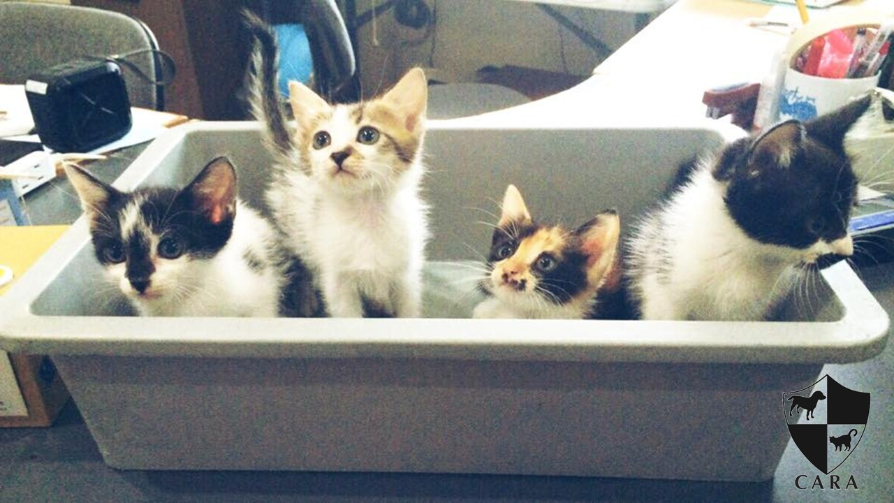 Find the Purr-fect kitten for you!