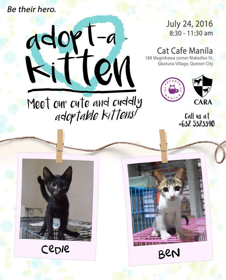 Adopt-a-Kitten!