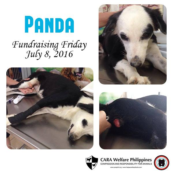 Fundraising Friday: Panda the Dog