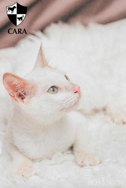 Meet Cody!