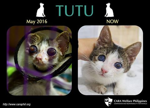 Before and After: Tutu
