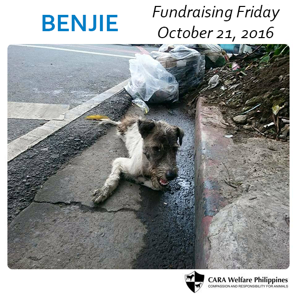 Fundraising Friday: Benjie the Dog